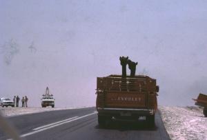 Eastern Province, Saudi Arabia 1978